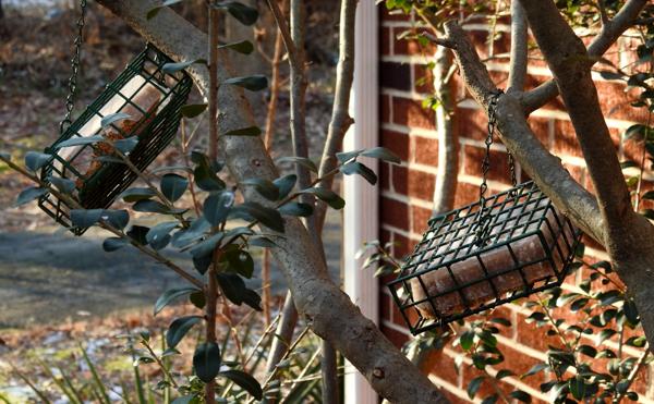 Suet Feeders in Bush Close to Windows