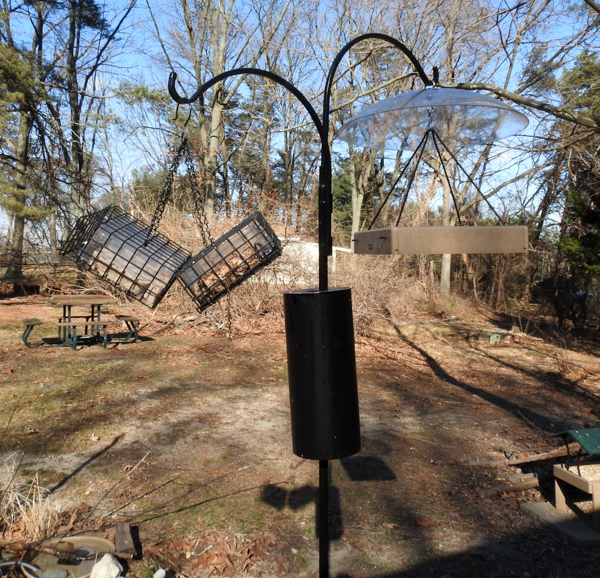 Suet and Nut Block Feeders and Hanging Platform Bird Feeder on Baffled Pole