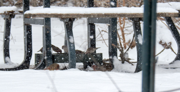 The Picnic Table Protects the Feeder From Some of the Snow