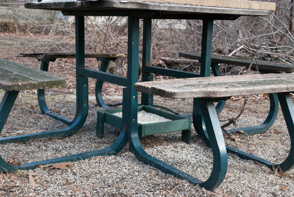 Ground Platform Feeder Under an Old Picnic Table