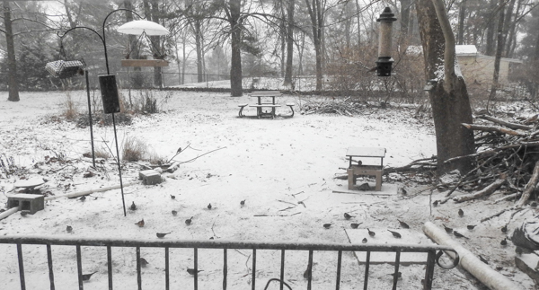 Birds and Bird Feeders in a Snowy Yard