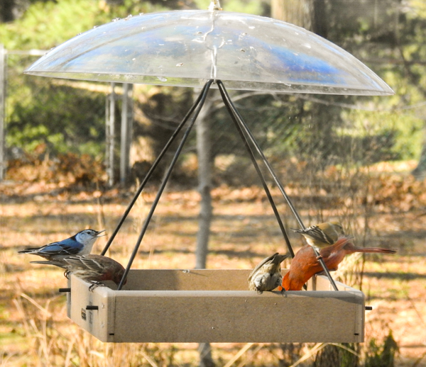 best shutterstock of feeder caged proof out min bird squirrels baffles how feeders keep wild more to squirrel