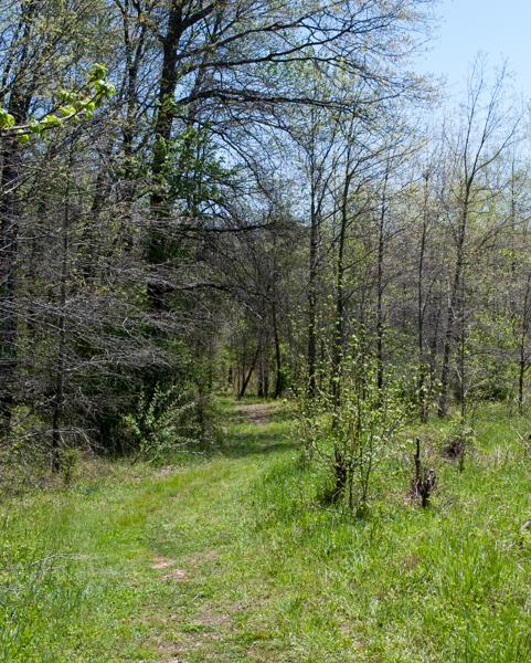 Merganser Trail