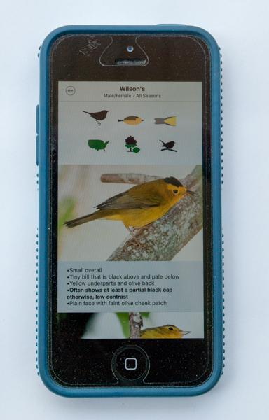Warbler Guide Bird Screen