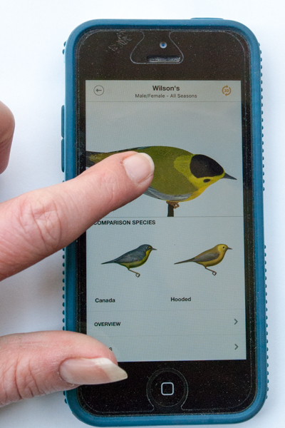 Warbler Guide App Species Screen