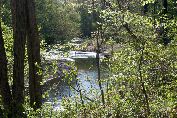 A View of The Little Patuxent River from the River Trail