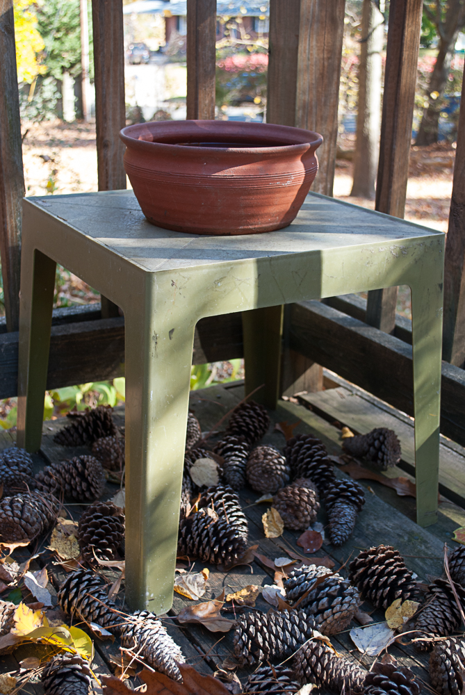 A pine cone defense around one of the bird baths.