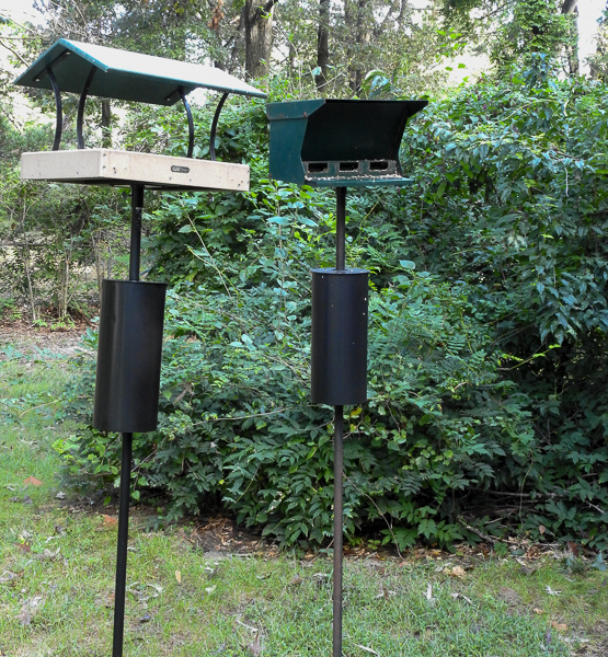 A New Feeder Next to an Old Feeder