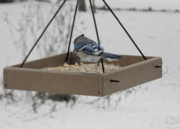 Blue Jay in a Feeder Choosing a Peanut
