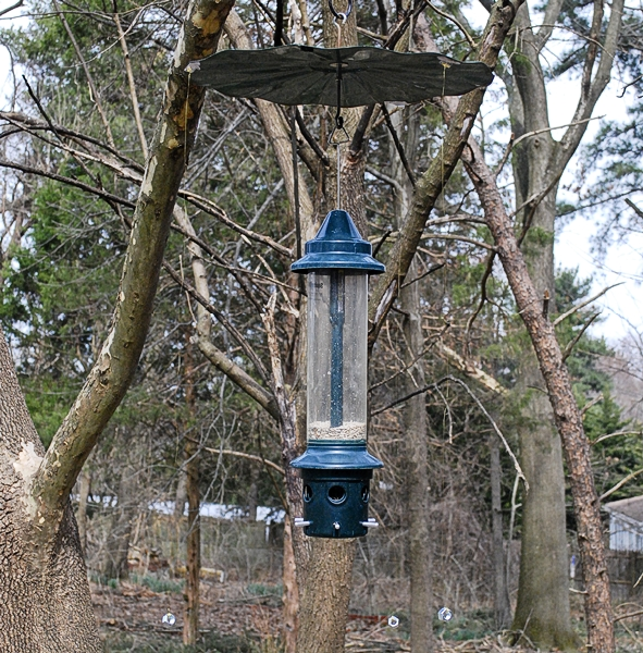 Wired Bird Feeder to Deter House Sparrows