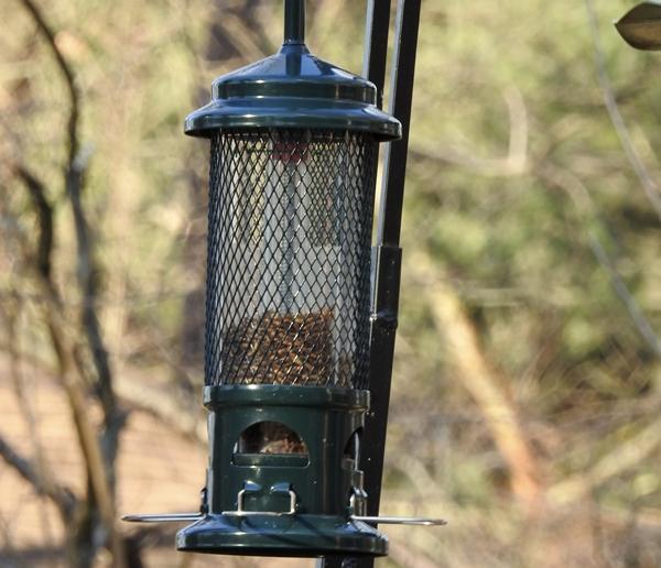 Squirrel Buster Standard Feeder