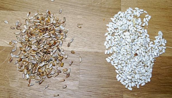 Nutra-Saff and Regular Safflower