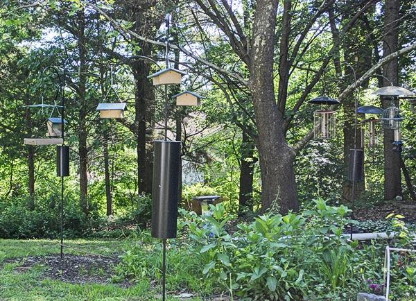 Many Bird Feeders in My Yard