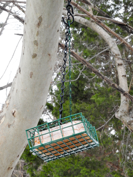 Dangling Plastic Protected Suet Cage Feeder