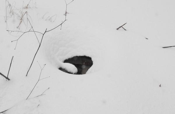 """Heated Birdbath in 30"""" of Snow"""