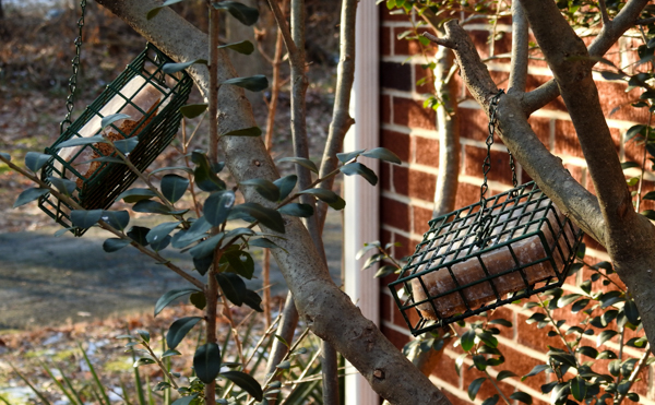 Suet Feeders in Bush Close to Windows