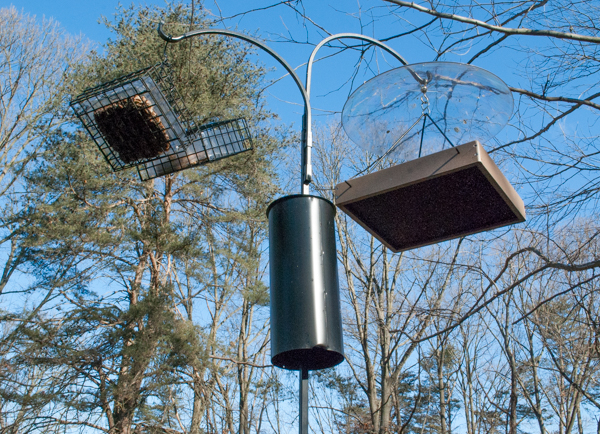 Bird feeders hang on a pole with a baffle underneath