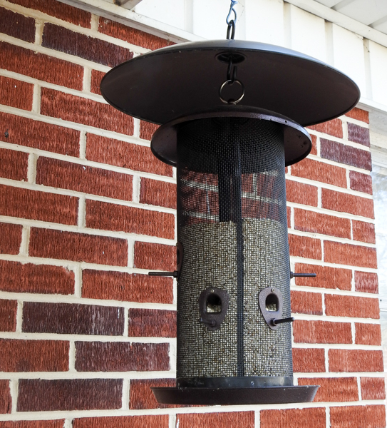 Bird Feeder With No Birds