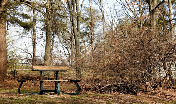 A Ground Platform Feeder Hides Under a Picnic Table Near a Brush Pile & Vine Tangle