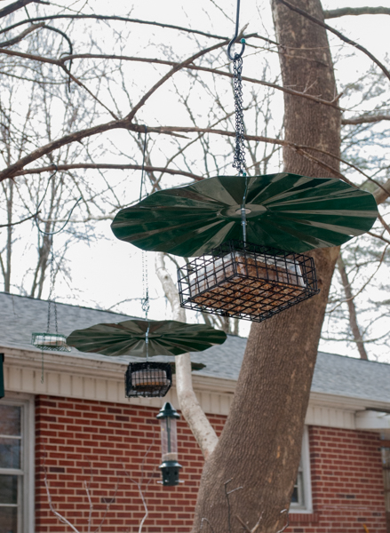 Suet and Nut Block Feeders Hanging From Tree Branch with baffles