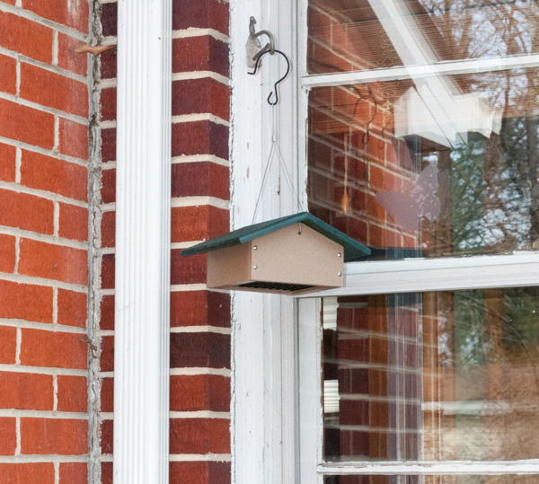 Suet Feeder Hung at an Inside Corner of the House