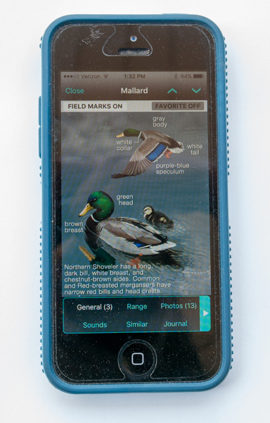 iBird Ultimate App Mallard Species General Screen