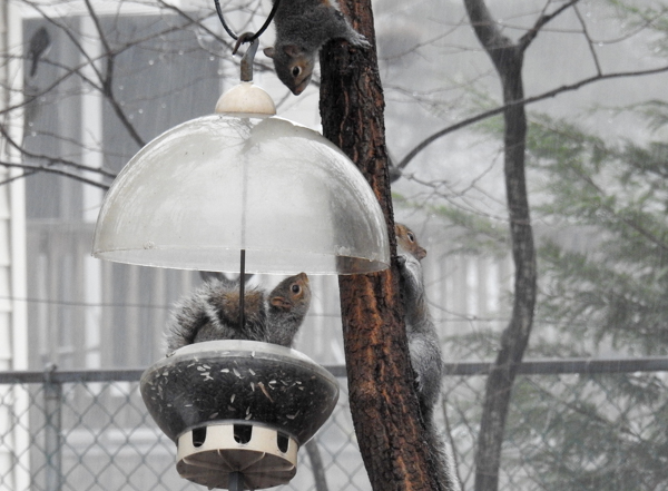 "My ""Squirrel Feeder"" is Popular with Squirrels"