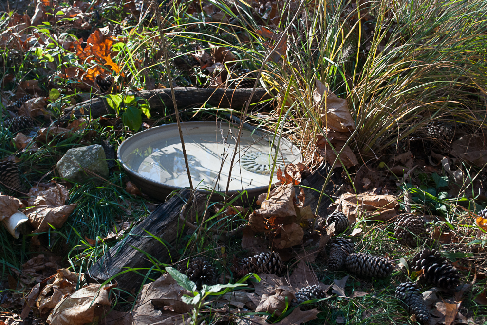 Pine cones around one of the birdbaths keeps cats out.