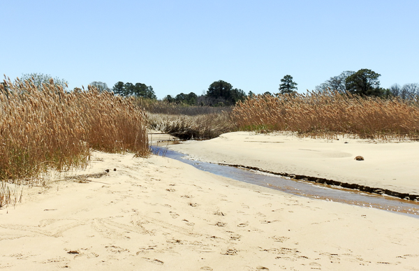 Beach Area at Hog Bay area of Chesapeake Bay Environmental Center