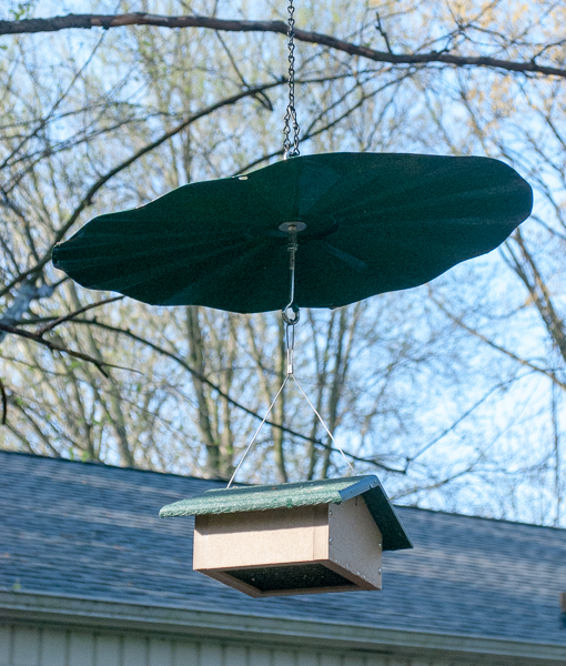 Suet Feeder Under an ERVA Baffle