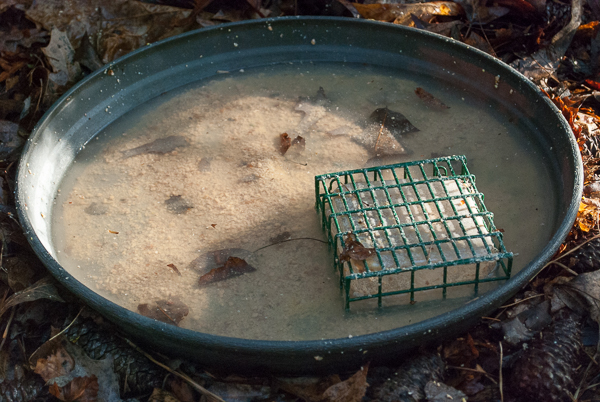 Hot Pepper Suet Dissolved in Birdbath