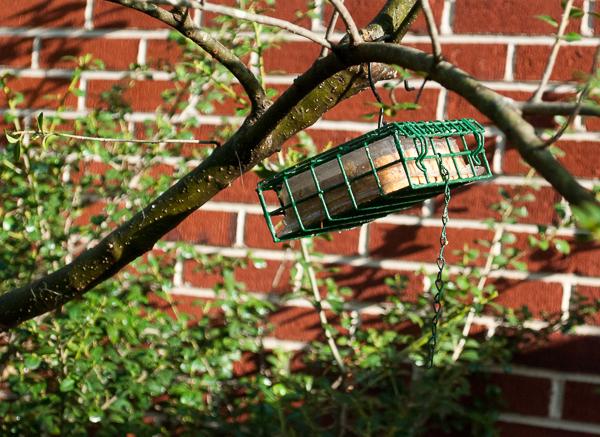 Cage Type Suet Feeder