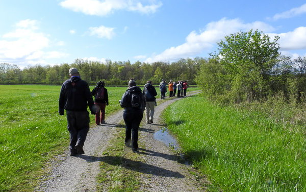 Group walking during van birding trip to Pickerel Creek near Magee Marsh