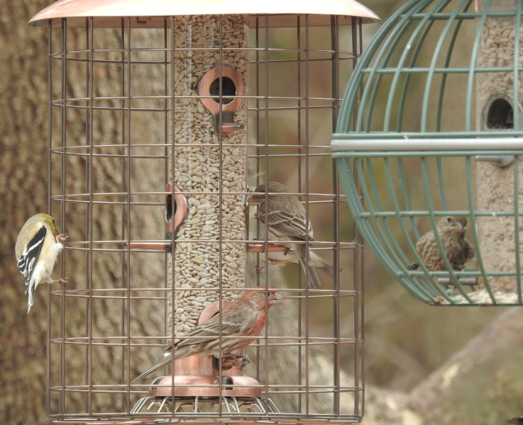 Woodlink & Nuttery Globe Feeders