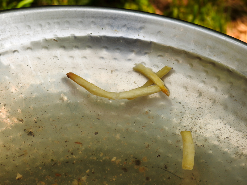 French Fries in the Birdbath