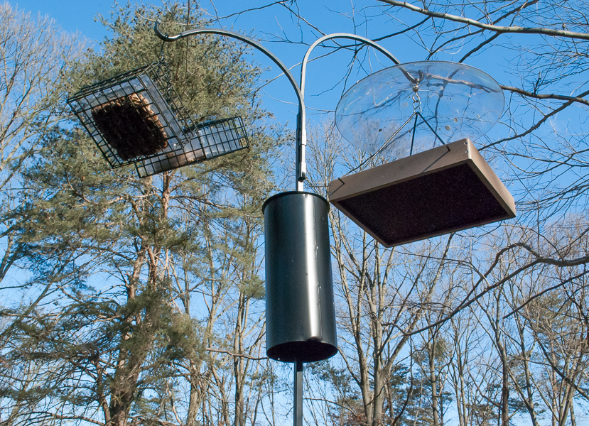Bird Feeders with a Shorter Squirrel Baffle on Pole