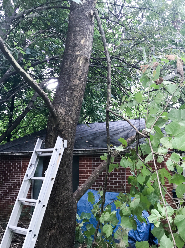 Cutting Down a Branch