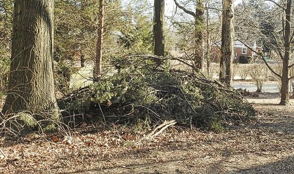 Side Yard Brush Pile
