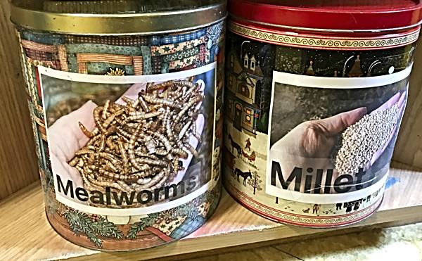Mealworms and Millet Stored in Old Christmas Treat Tins