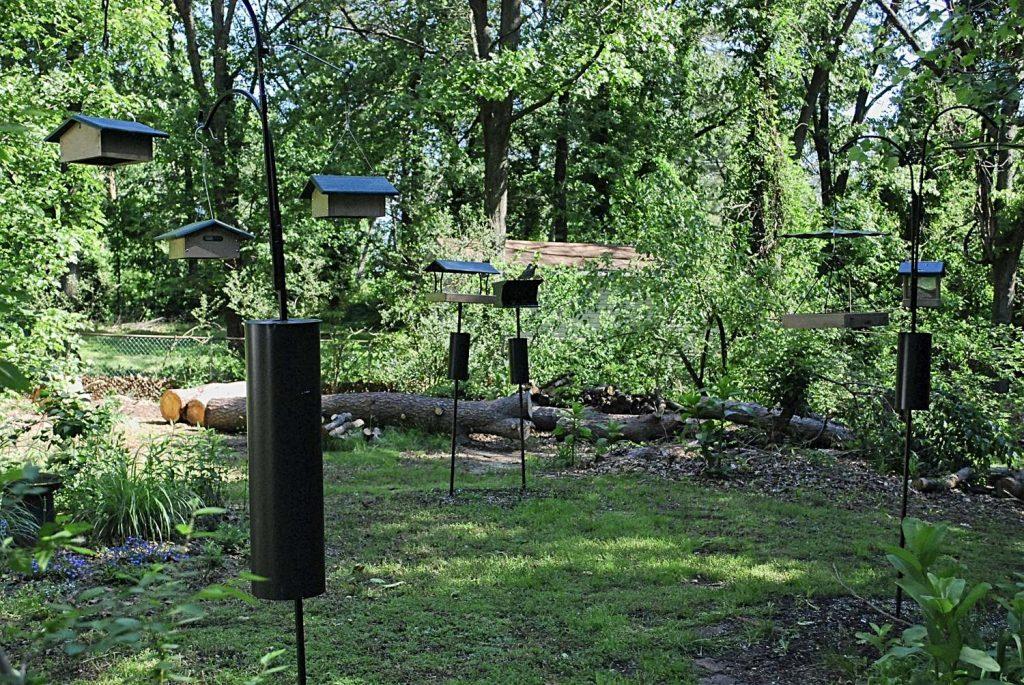 Bird Feeders in Back Yard