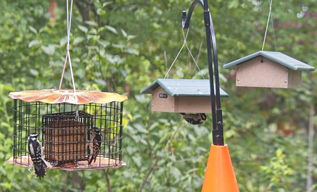 Downys on Both Types of Suet Feeder