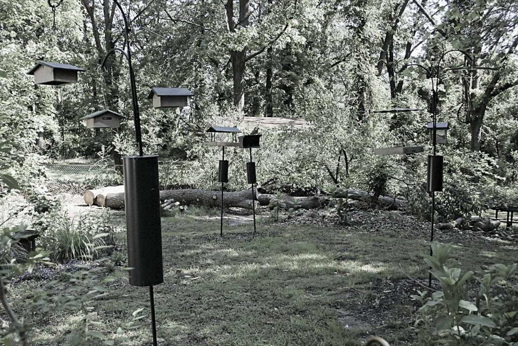 Empty Feeders Can Mean Hawks Are Around