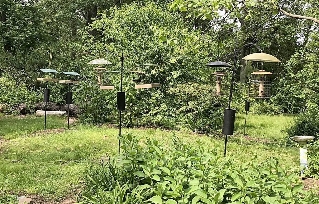 Empty Bird Feeders During Cicada Time