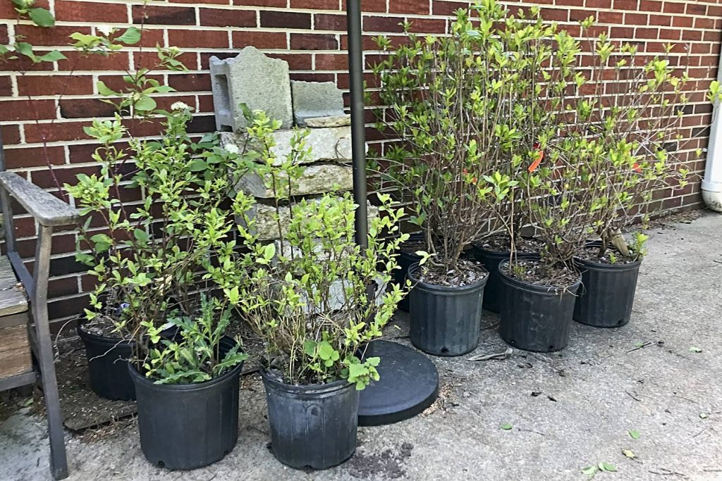 Some of the Native Shrubs We've Recently Purchased