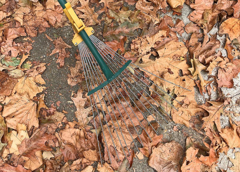 Leaves and Rake