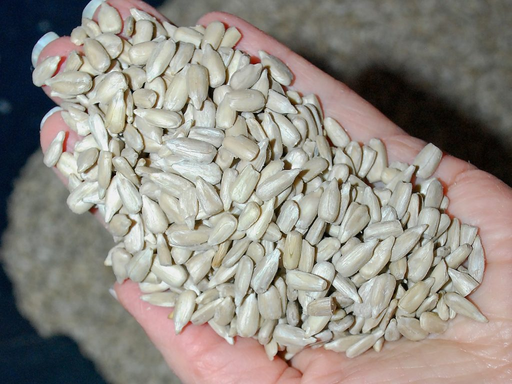 Sunflower Seed More Expensive?